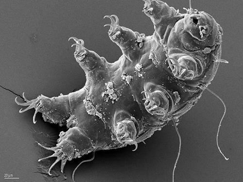 tardigrade-water-bear-nasa