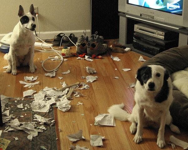 cachorros-pegos-no-flagra-14