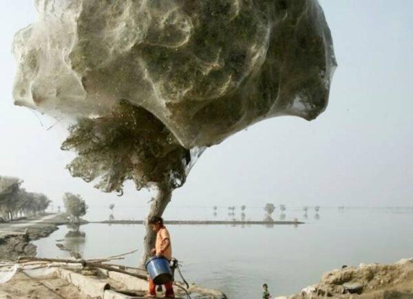 árvore aranhas