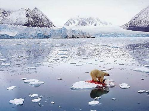 urso-polar-2