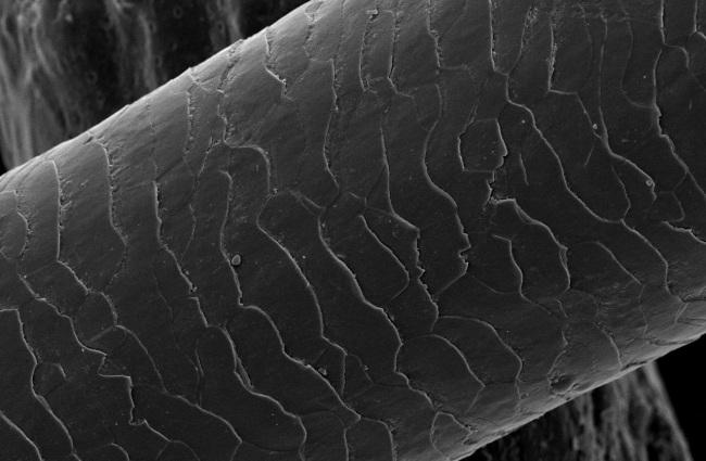 cabelo_microscopio