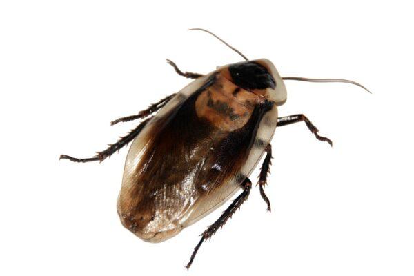 cockroach-566712_1280