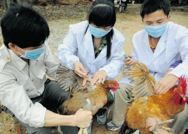 gripe-aviária