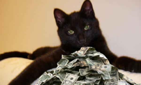 Worlds-richest-cat
