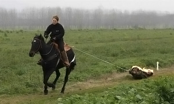 horsepullrecord