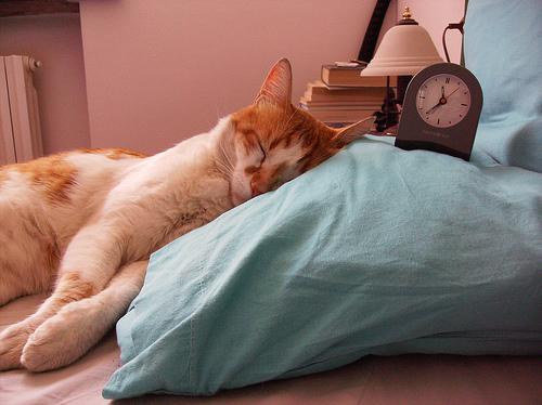 dormindo-atc3a9-tarde-i