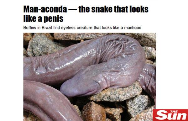 cobra-penis01
