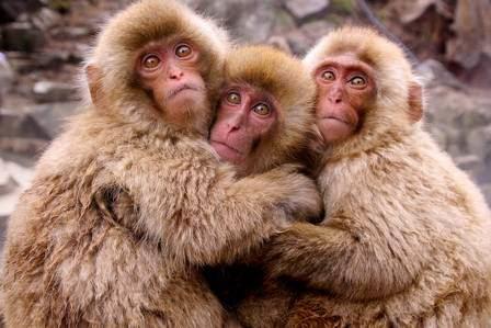macacos_fofos1