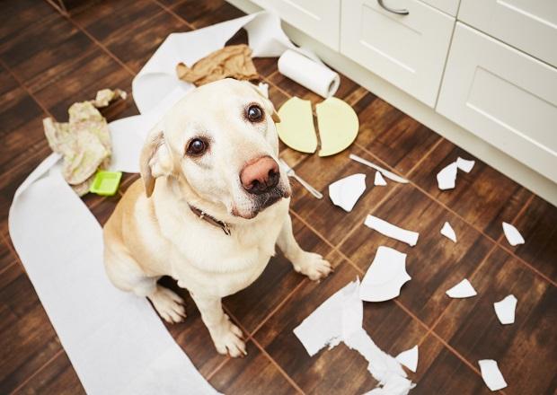 Resultado de imagem para cães e crianças fazendo bagunças