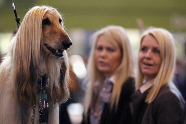 13 imagens que provam que os cachorros são a cara do dono