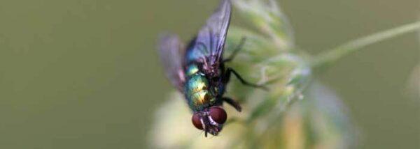 content mosca varejeira consulta remedios