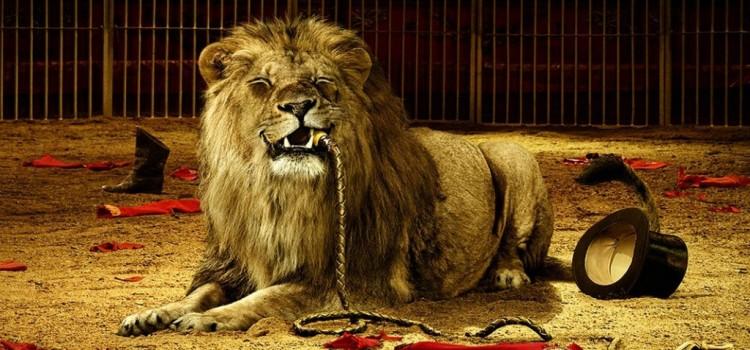 Tem Na Web - 7 casos de quebrar o coração envolvendo a morte de animais de circo