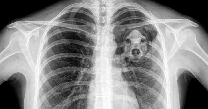 Tem Na Web - Cientistas explicam porque a dor de perder um cão é a mesma de perder um ente querido