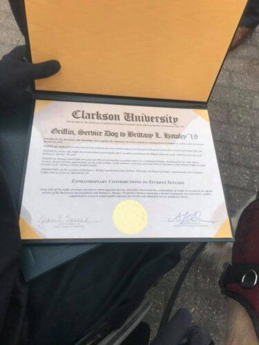 diploma cachorro