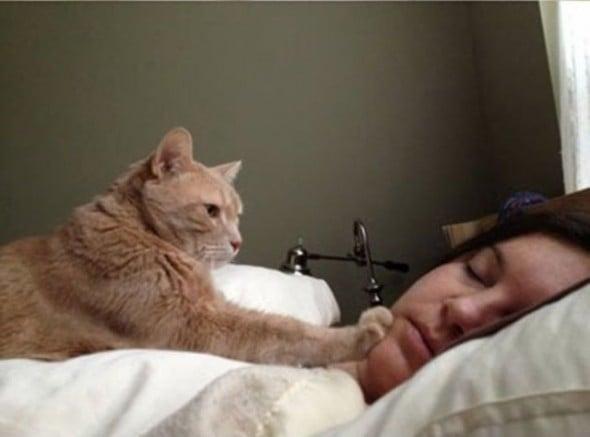 gato acordando