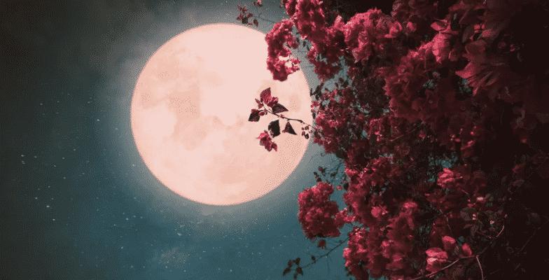 superlua rosa